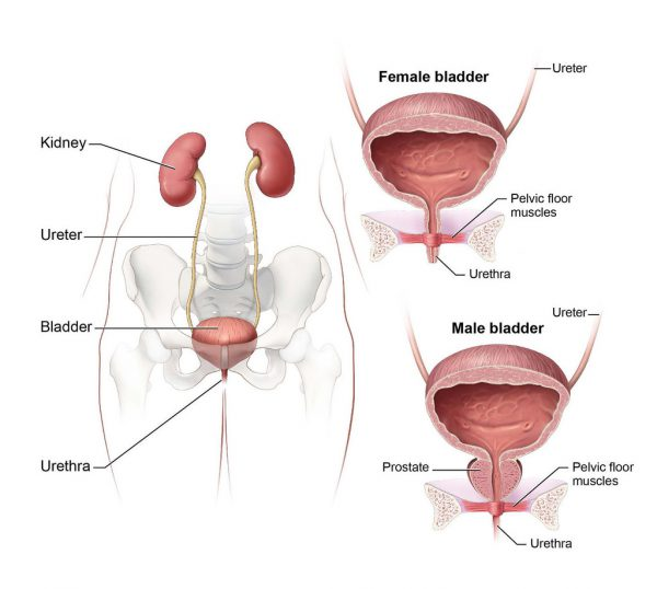 urinary-incontinence-treatment-chandigarh
